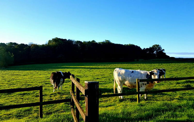 the_old_stables_livestock-min